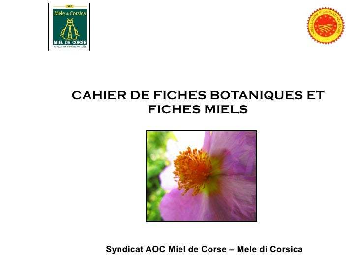 Fiches botaniques aop miel de Corse,Camille Laurent