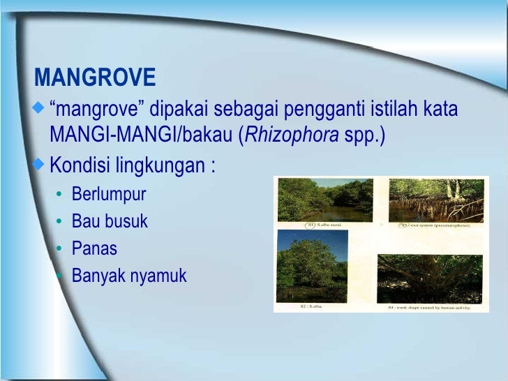 "MANGROVE <ul><li>"" mangrove"" dipakai sebagai pengganti istilah kata MANGI-MANGI/bakau ( Rhizophora  spp.) </li></ul><ul><l..."