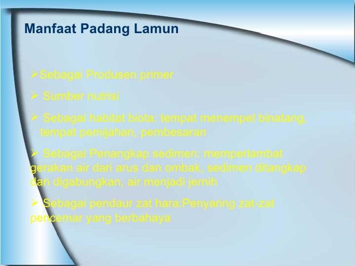 Manfaat Padang Lamun <ul><li>Sebagai Produsen primer </li></ul><ul><li>Sumber nutrisi </li></ul><ul><li>Sebagai habitat bi...
