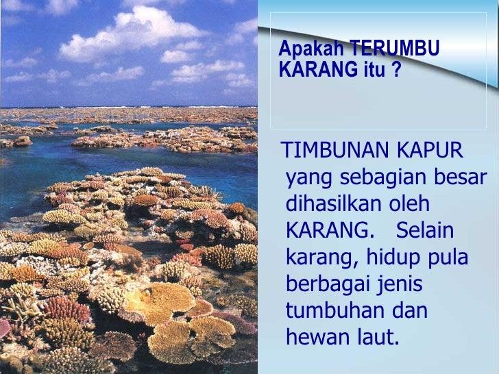 Apakah TERUMBU KARANG itu ? <ul><li>TIMBUNAN KAPUR yang sebagian besar dihasilkan oleh KARANG.  Selain karang, hidup pula ...