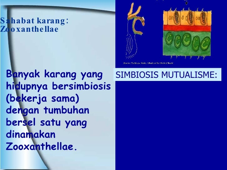 Sahabat karang: Zooxanthellae Banyak karang yang hidupnya bersimbiosis (bekerja sama) dengan tumbuhan bersel satu yang din...