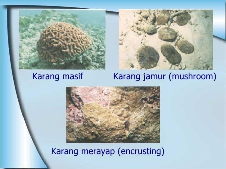 <ul><li>Karang merayap (encrusting) </li></ul>Karang masif Karang jamur (mushroom)