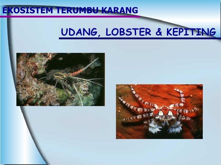 EKOSISTEM TERUMBU KARANG UDANG, LOBSTER & KEPITING