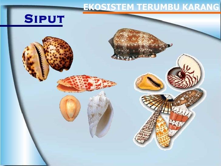 EKOSISTEM TERUMBU KARANG Siput