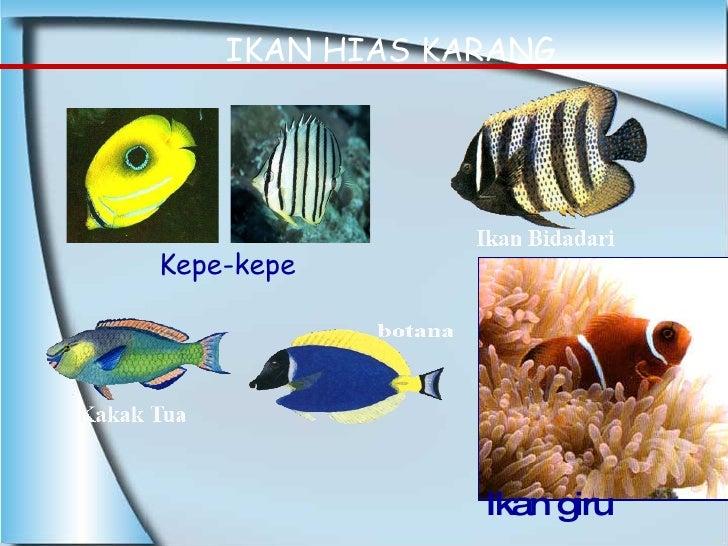 Kepe-kepe IKAN HIAS KARANG Ikan giru