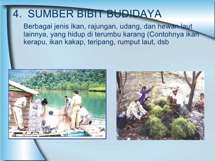 4.  SUMBER BIBIT BUDIDAYA Berbagai jenis ikan, rajungan, udang, dan hewan laut lainnya, yang hidup di terumbu karang (Cont...