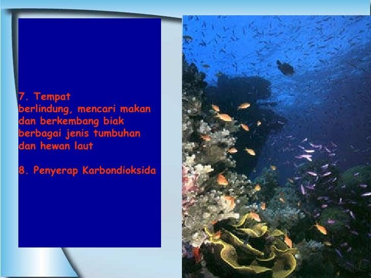 7. Tempat  berlindung, mencari makan dan berkembang biak  berbagai jenis tumbuhan dan hewan laut 8. Penyerap Karbondioksida