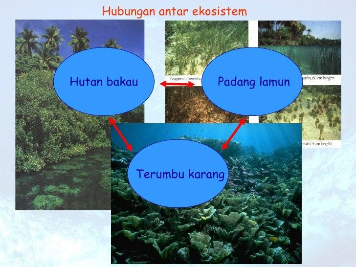 Hubungan antar ekosistem Terumbu karang Padang lamun Hutan bakau