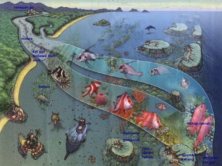 lamun Kakap merah Halimeda gumpalan muara terumbu karang resapan air laut dalam lamun umbalan zat gizi zat gizi terbawa ol...