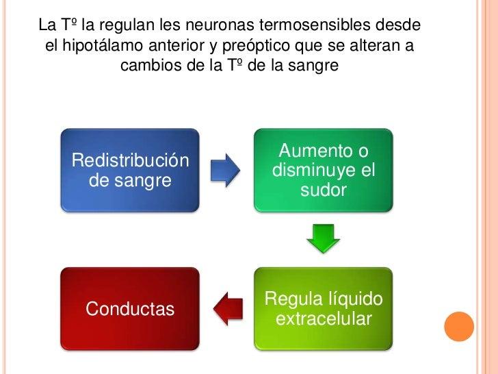 La Tº la regulan les neuronas termosensibles desde el hipotálamo anterior y preóptico que se alteran a            cambios ...