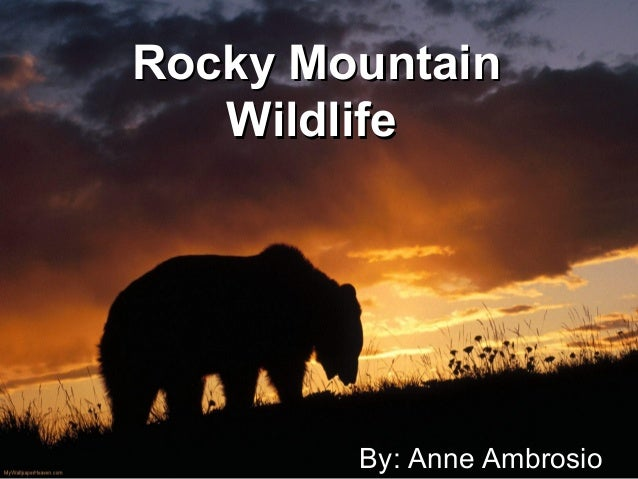 Rocky MountainRocky Mountain WildlifeWildlife By: Anne Ambrosio