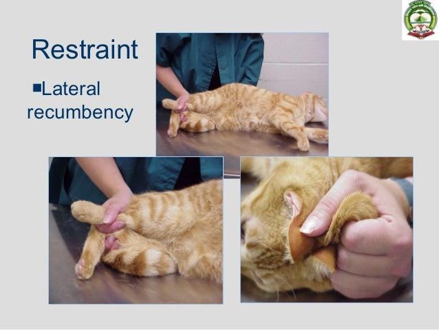 Field Anesthesia Canine Feline