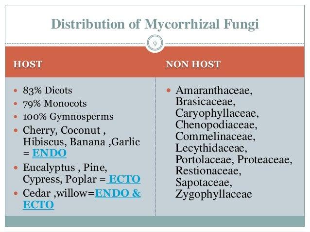 endomycorrhizal slide - photo #22