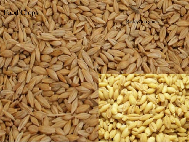major crops of pakistan