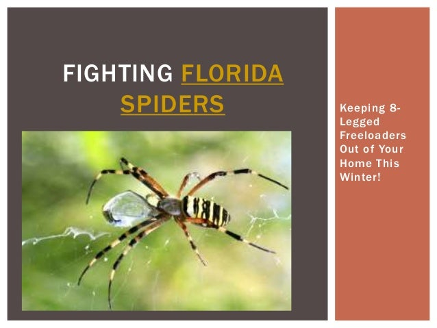 FIGHTING FLORIDA SPIDERS  Keeping 8Legged Freeloaders Out of Your Home This Winter!