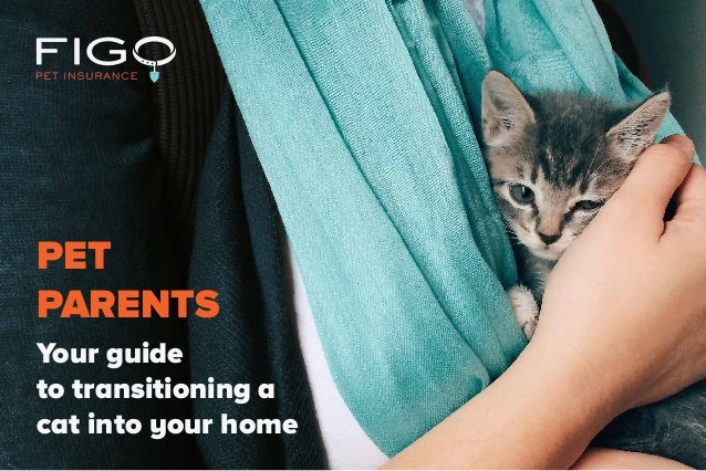 Your guide to transitioning a cat into your home PET PARENTS