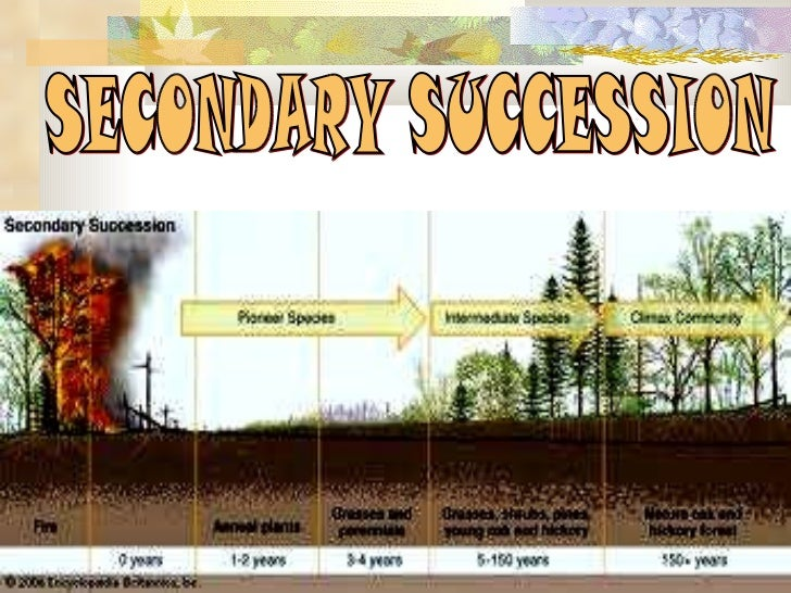 Ecological succession Facts for Kids