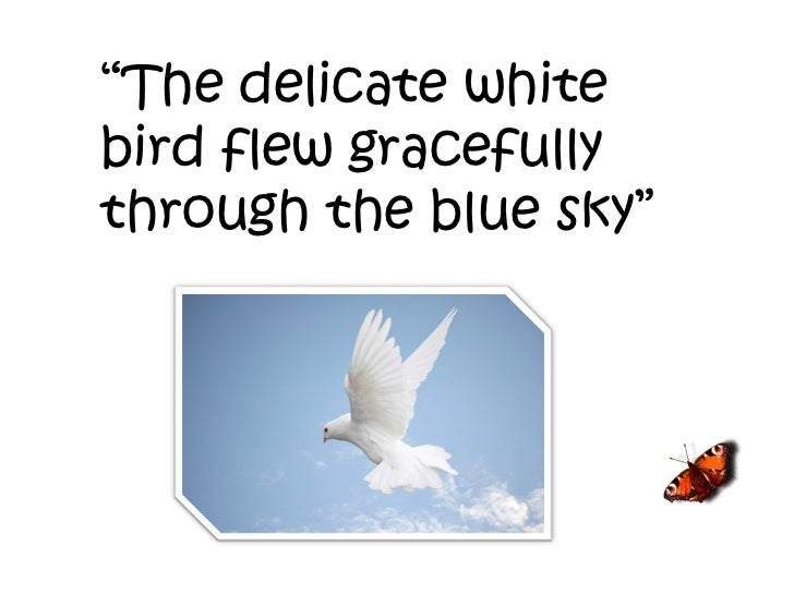 """"""" The delicate white bird flew gracefully through the blue sky"""""""