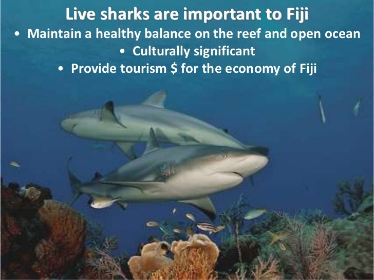 why sharks are important Why do we label the shark a killer, while we call the lion magnificent sharks are very important in the ocean ecosystem like most top predators, sharks feed on the sick and weak, thereby keeping the schools of fish on which they feed healthy.