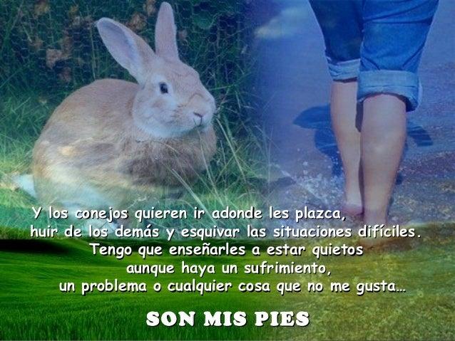 Y los conejos quieren ir adonde les plazca,Y los conejos quieren ir adonde les plazca, huir de los demás y esquivar las si...