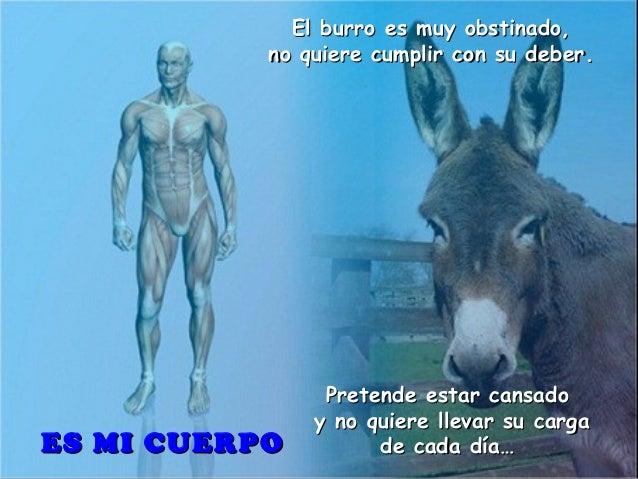 El burro es muy obstinado,El burro es muy obstinado, no quiere cumplir con su deber.no quiere cumplir con su deber. Preten...