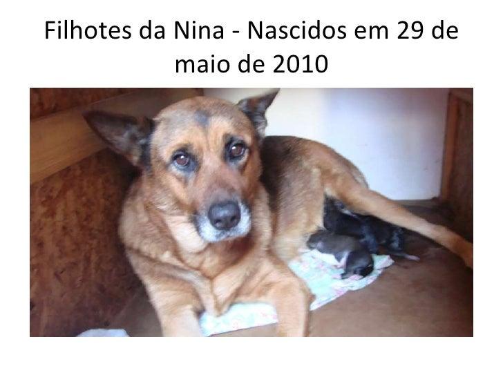 Filhotes da Nina - Nascidos em 29 de maio de 2010<br />