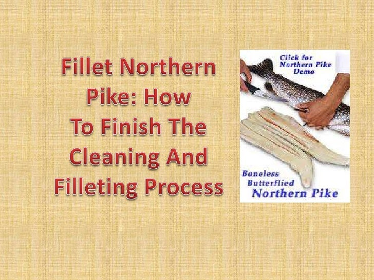 Fillet Northern Pike: How To Finish The Cleaning And Filleting Process<br />