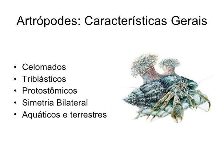 Artrópodes: Características Gerais <ul><li>Celomados </li></ul><ul><li>Triblásticos </li></ul><ul><li>Protostômicos </li><...