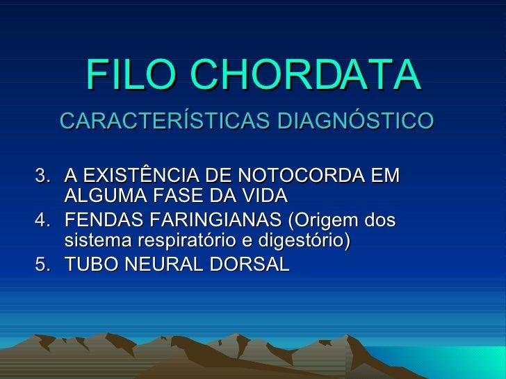 FILO CHORDATA <ul><li>CARACTERÍSTICAS DIAGNÓSTICO </li></ul><ul><li>A EXISTÊNCIA DE NOTOCORDA EM ALGUMA FASE DA VIDA </li>...