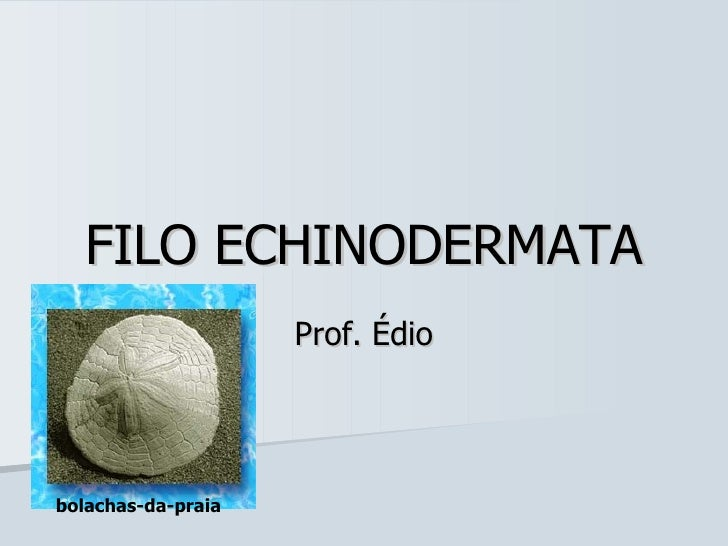 FILO ECHINODERMATA Prof. Édio bolachas-da-praia