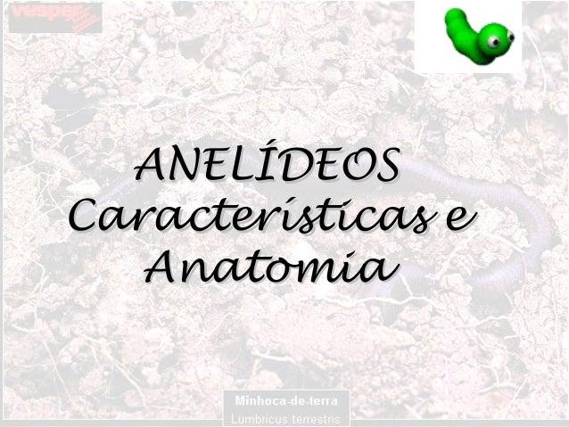 ANELÍDEOSANELÍDEOS Características eCaracterísticas e AnatomiaAnatomia