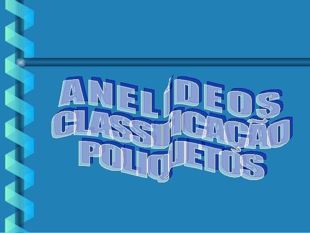 MORFOLOGIA DOS ANELÍDEOS