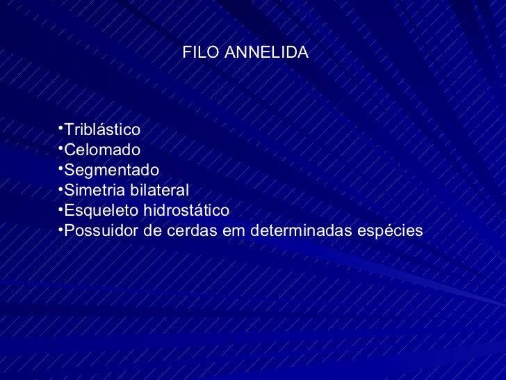FILO ANNELIDA <ul><li>Triblástico </li></ul><ul><li>Celomado </li></ul><ul><li>Segmentado </li></ul><ul><li>Simetria bilat...