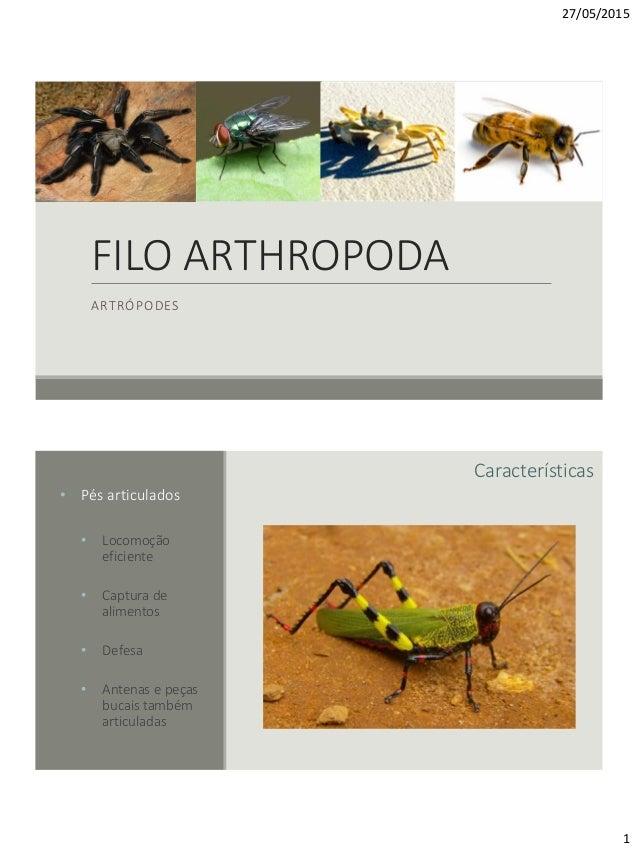 27/05/2015 1 FILO ARTHROPODA ARTRÓPODES Características • Pés articulados • Locomoção eficiente • Captura de alimentos • D...