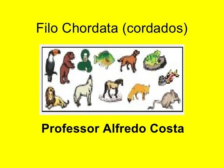 Filo Chordata (cordados) Professor Alfredo Costa