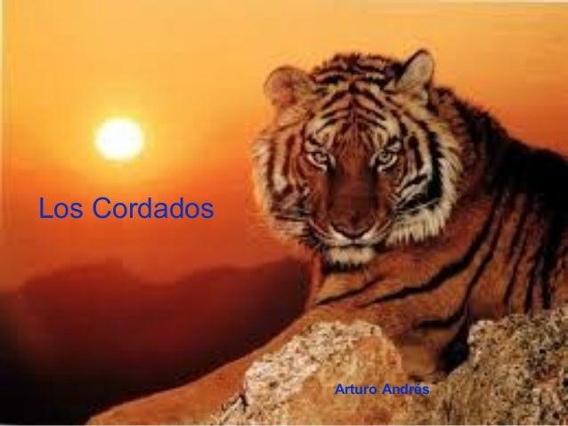 Filo CordadosLos CordadosArturo Andrés