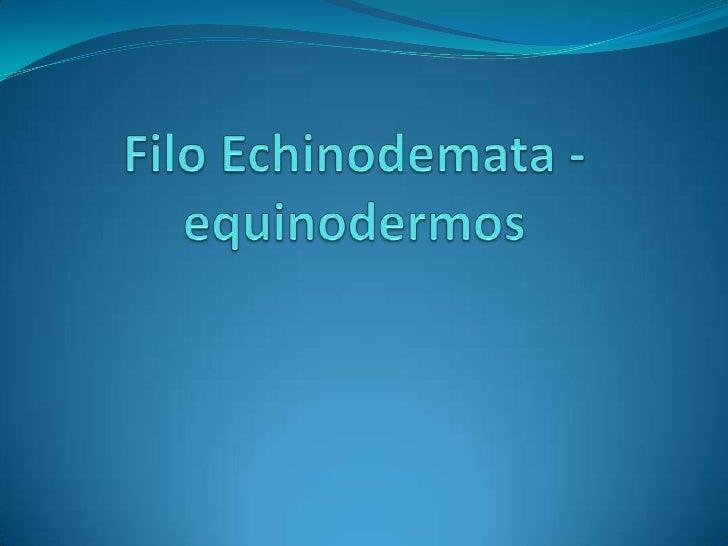 Filo Echinodemata - equinodermos<br />