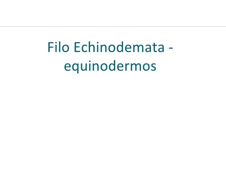 Filo Echinodemata - equinodermos