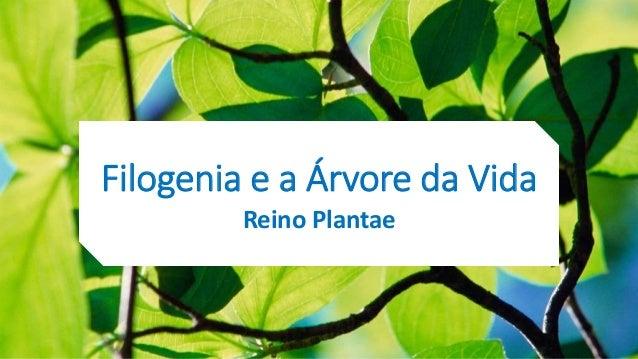 Filogenia e a Árvore da Vida Reino Plantae