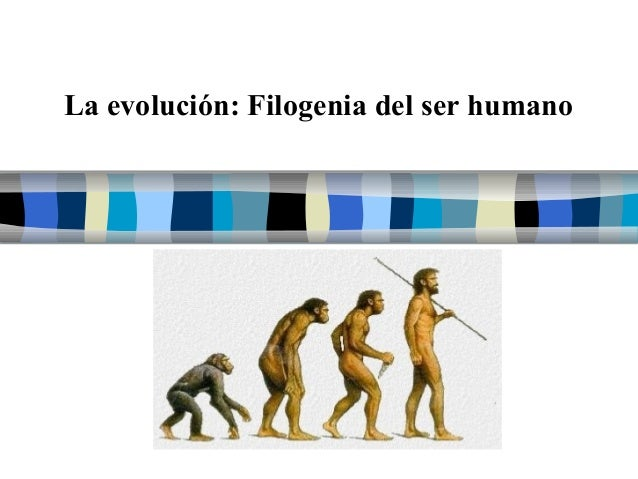 La evolución: Filogenia del ser humano  Filogenia de ser humano