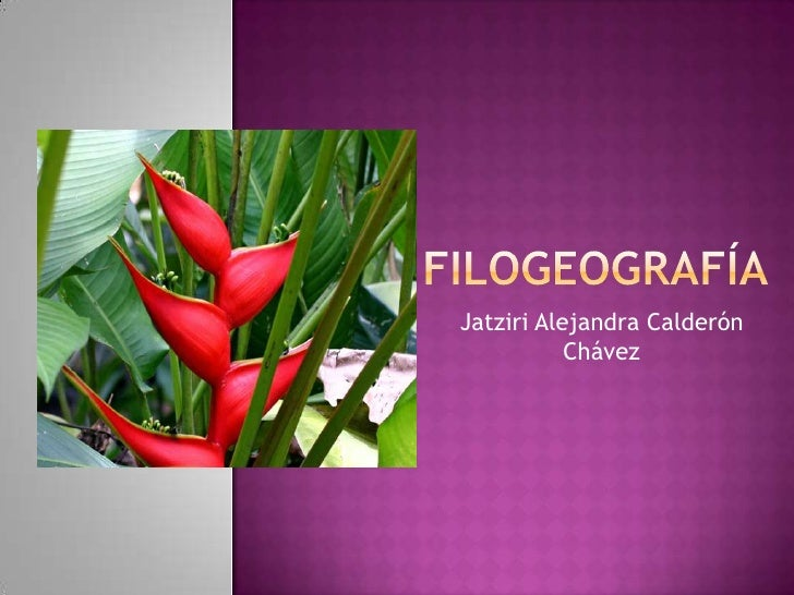 Filogeografía<br />Jatziri Alejandra Calderón Chávez<br />