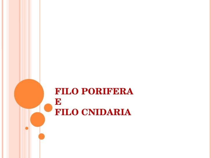 FILO PORIFERA  E FILO CNIDARIA