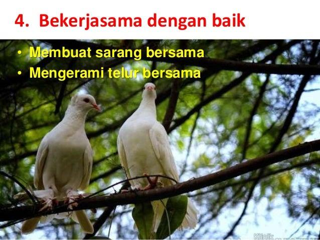 76 Foto Gambar Burung Merpati Romantis HD Paling Unik Gratis