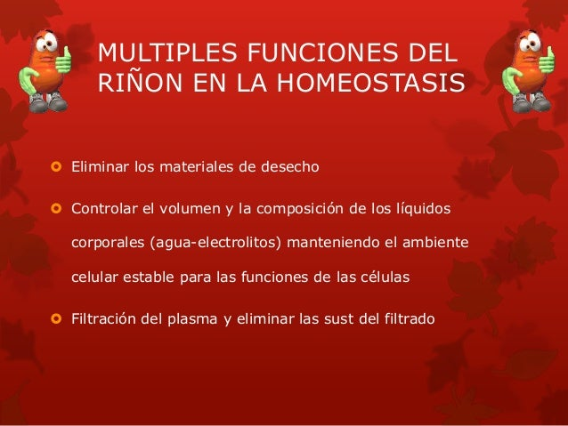MULTIPLES FUNCIONES DEL RIÑON EN LA HOMEOSTASIS  Eliminar los materiales de desecho  Controlar el volumen y la composici...