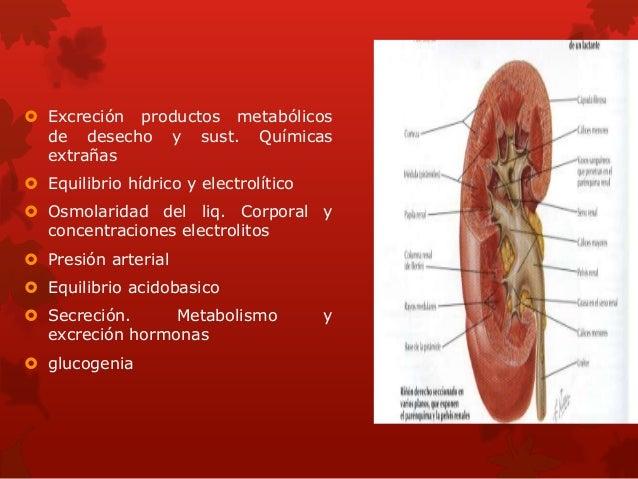  Excreción productos metabólicos de desecho y sust. Químicas extrañas  Equilibrio hídrico y electrolítico  Osmolaridad ...