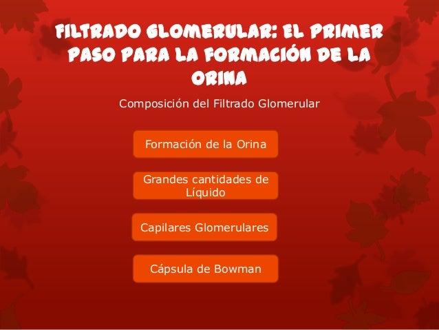 Determinantes del Filtrado Glomerular  El FG esta determinado por:  La suma de las fuerzas hidrostáticas y coloidosmótic...