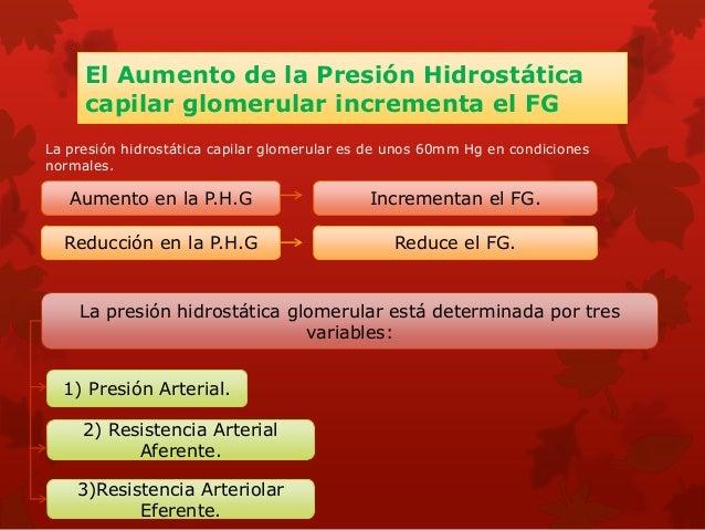 La Angiotensina II contrae las arteriolas eferentes Angiotensina II Vasoconstrictor renal potente Contrae las arteriolas a...