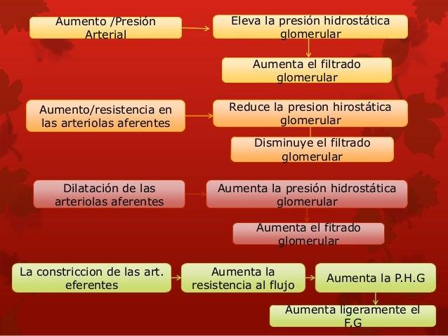 NO. derivado del endotelio reduce la resistencia vascular renal y aumenta el FG. •Autacoide que reduce la resistencia vasc...