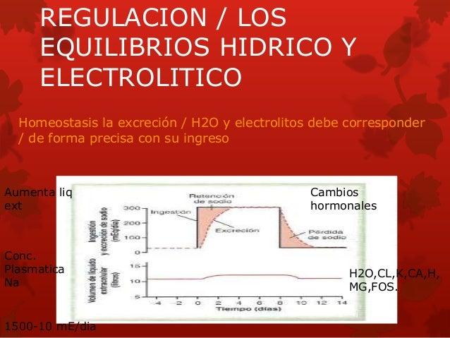 REGULACION / LOS EQUILIBRIOS HIDRICO Y ELECTROLITICO Homeostasis la excreción / H2O y electrolitos debe corresponder / de ...
