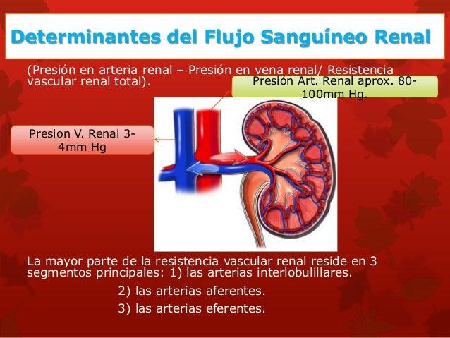 Autorregulación del FG Y FSR •Mantener reparto de O2 y nutrientes. •Extracción de productos de desecho. •Mantener FG para ...